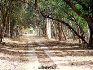 217335,xcitefun-lal-suhanra-national-park-5